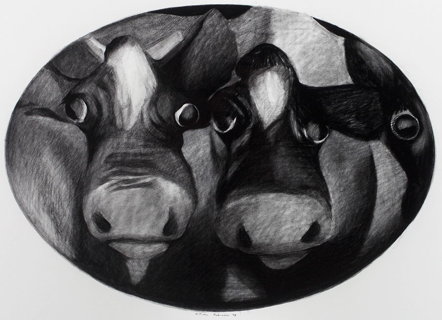 William Robinson 'Cow portrait (Oval format)' 1979. Conté on paper. QUT Art Collection, Brisbane. Donated through the Australian Government's Cultural Gifts Program by William Robinson, 2009.